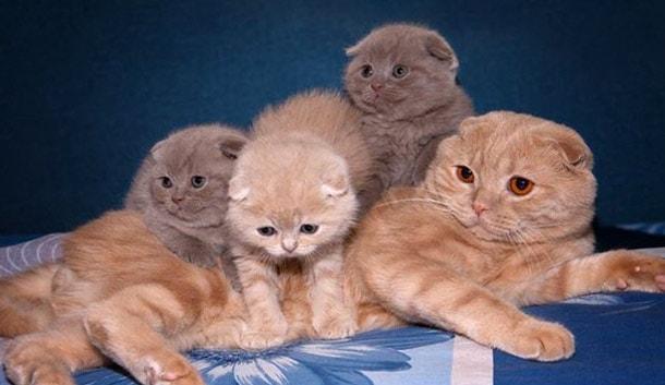 красивое семейство