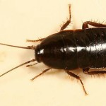 тараканов называют стасиками