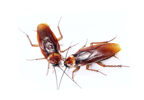 самое эффективное средство от тараканов