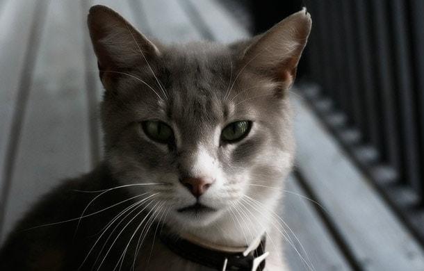повзрослевший котик