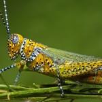 прыгающие насекомые