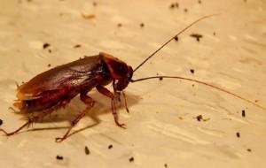 куда ушли тараканы