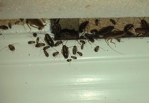 гель раптор от тараканов
