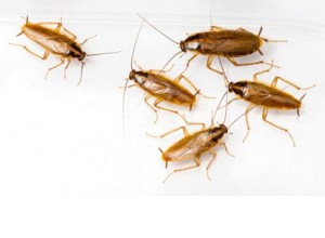 маленькие тараканы