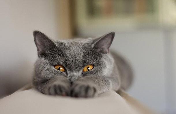 капли для кошек котят от блох