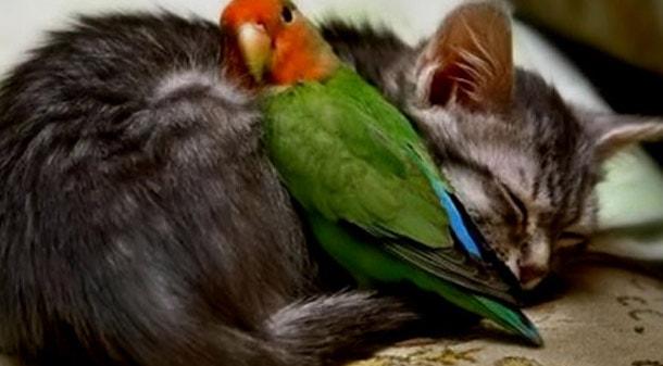 Кошачьи блохи кусают людей: как избавиться в квартире, могут ли жить на человеке