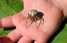 Оказание первой помощи при укусах насекомых