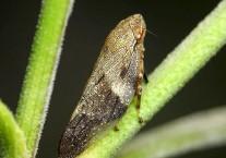 Список прыгающих насекомых
