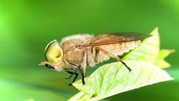 Укусы кровососущих насекомых