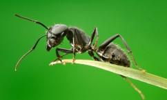 Средства и способы выведения муравьев