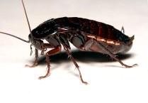 Фото тараканов в квартире