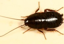 Народные названия тараканов