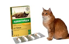 Капли для кошек и котят от блох
