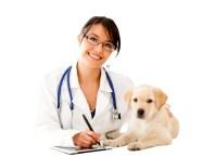 Как определить есть ли блохи у собаки